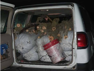 """בעל ואישה נעצרו בחשד לגניבת 300 ק""""ג זיתים ממטעי כפר קיש"""