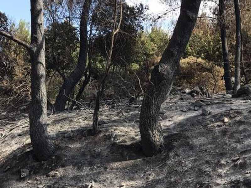 """נוטעים תקווה לעתיד: קק""""ל יוצאת במבצע נטיעות דיגיטאליות ליער השרוף בנוף הגליל"""
