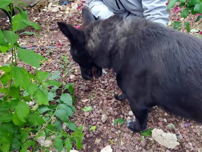 מגדל העמק: כלבים קשורים חולצו מדירה במרכז העיר