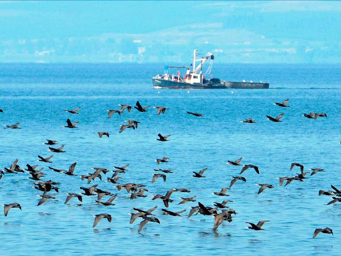 תצפית על עופות המים במקטע שביל סובב כינרת מכפר נחום לעיינות טבחה