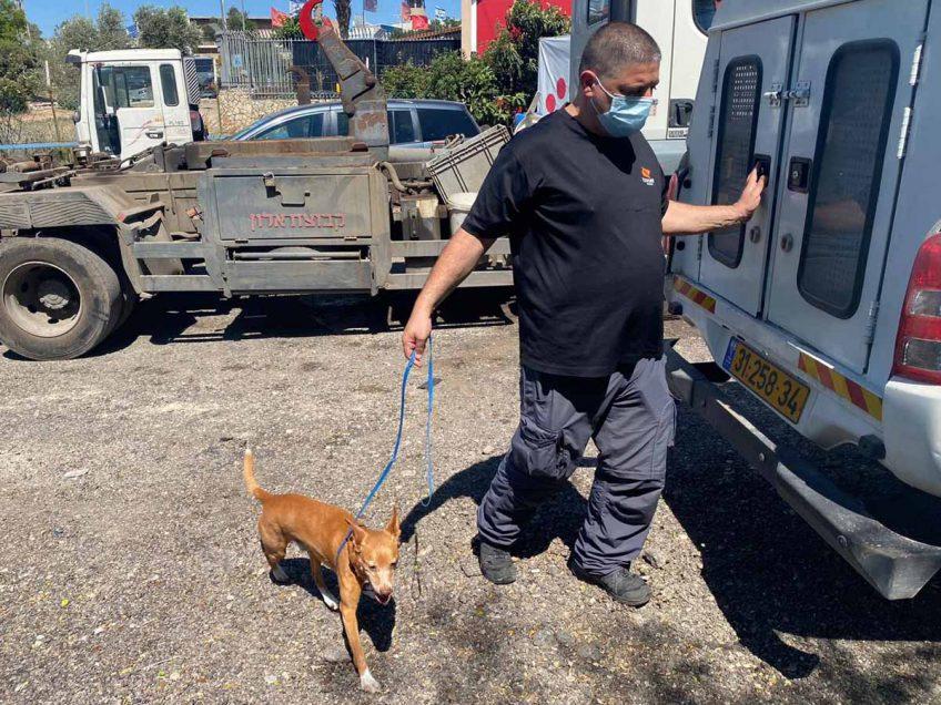 מגדל העמק: מבצע מוצלח לאיתור כלבים מסוכנים