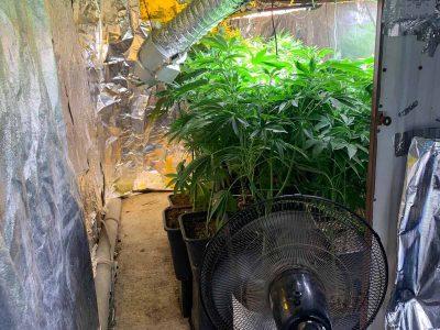 מגדל העמק: המשטרה חשפה מעבדה לגידול סמים