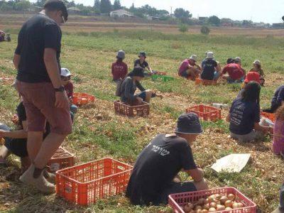 """חופש גדול חקלאי: """"יוצאים מהמסכים"""" לשדות"""