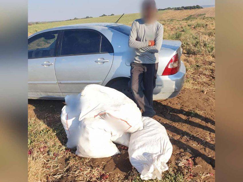 """המאבק בגניבות החקלאיות: נלכד חשוד בגניבת עשרות ק""""ג בצל מבית קשת"""