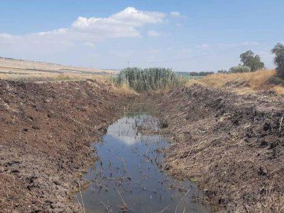 יתושים נגועים בנגיף קדחת מערב הנילוס התגלו בנחל יבנאל