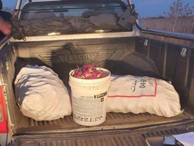 """""""על חם"""": תושב האזור חשוד בגניבת 100 ק""""ג תוצרת חקלאית סמוך לבית קשת"""