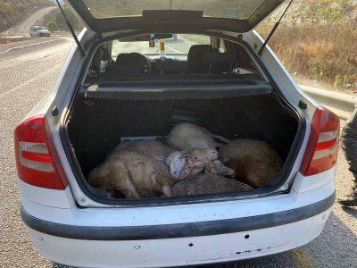 """בלשי מג""""ב עצרו חשודים בגניבה והתעללות בבעלי חיים"""