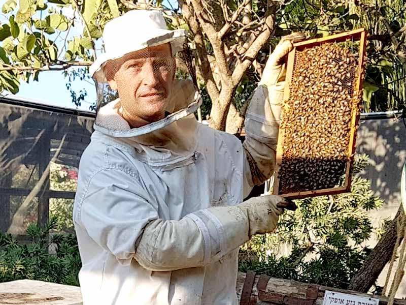 בועז בן זאב דבוראי מועצת הדבש. צילום: דבורת התבור