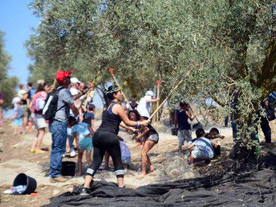 פסטיבל מסיק למשפחות בחול המועד סוכות