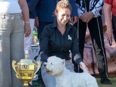 בשבת: תערוכת כלבים בינלאומית בנוף הגליל